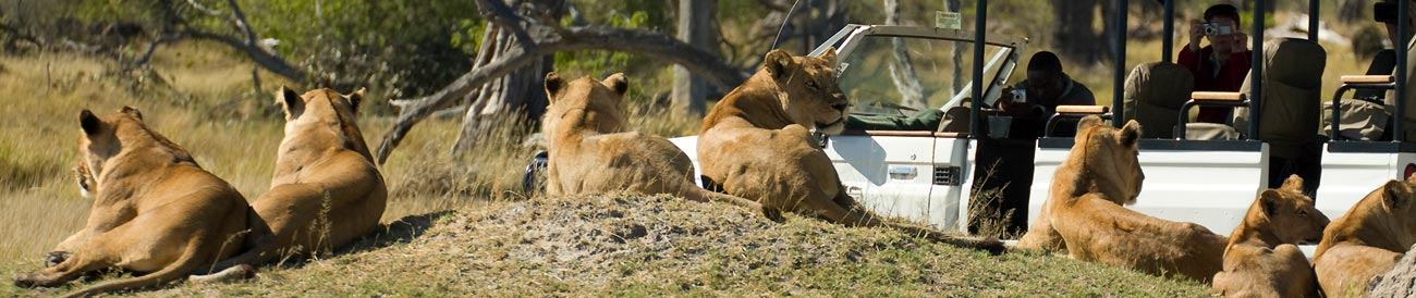 Okavango, Moremi and Savute Safari